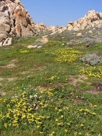 Fastenwanderungen an der bl�henden K�ste Korsikas